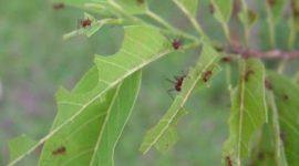 Ahuyentar a las hormigas de forma ecológica