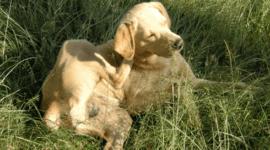 ¿Por qué la gente prefiere perros agresivos?