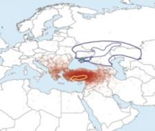 Paseo científico: Agujeros negros, la velocidad del guepardo, y mucho más