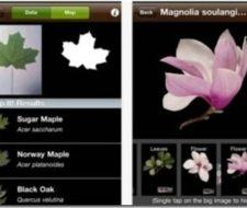 Conocer plantas por fotos con LeafSnap
