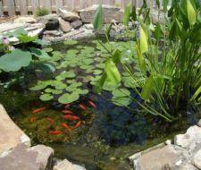 Plantas para estanques
