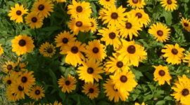 Plantas indestructibles