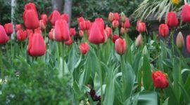 Plantas en primavera