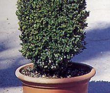 Arbustos, modelar