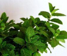 Técnicas de propagación de plantas