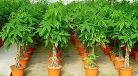 Plantas: Problemas y soluciones