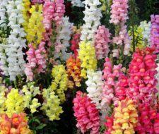 Cuáles son las flores de primavera