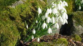 Cuáles son los arbustos para plantar en otoño e invierno. Parte II
