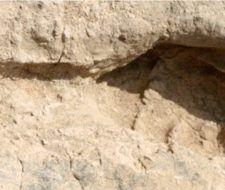 Huellas de Homo erectus de hace 1,5 millones de años