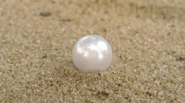 ¿Cómo hacen perlas las ostras?