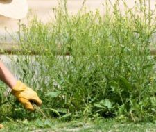 Eliminar las malas hierbas – Remedios Ecológicos
