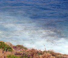 Macropiscifatorías: enormes fábricas de contaminación mariña