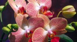 Orquídeas, plantas de mucha historia