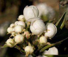 Cómo alargar la vida de las flores