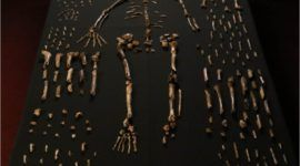 Homo naledi, nueva especie humana descubierta en Sudáfrica