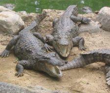 Los grandes depredadores influyen en el clima