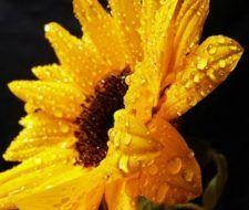 Los Cactus: sus características y cuidados