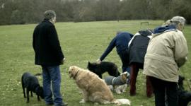 Los perros no siguen al más dominante, sino al más amigable