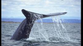 En defensa de las ballenas