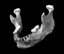 Los primeros Homo sapiens europeos tenían abuelos neandertales