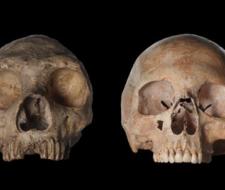 Antepasado común entre neandertales y Homo sapiens