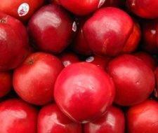 Los árboles de manzana