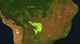 El Gran Pantanal, el humedal más grande del mundo, amenazado con desaparecer.