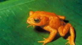 8 animales extintos que todos debimos conocer