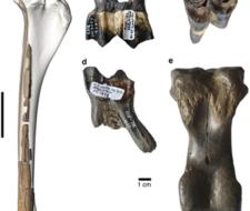 ADN de hace 400 mil años desconcierta a los expertos