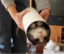 10 fotos que nos enseña la obsesión por las cajas de todos los felinos