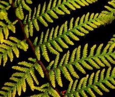 Los diferentes tipos de plantas de bambú