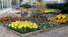 Las plantas de exterior que aguantan el frío invierno