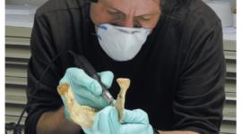 Grabados neandertales de 40 mil años descubiertos en Gibraltar