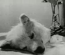 Perros zombies, o experimentos de terror