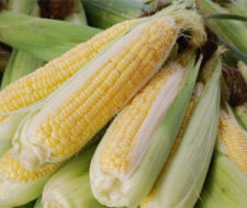 Alimentos transgénicos, la polémica continúa entre producción, medio ambiente y comercio.