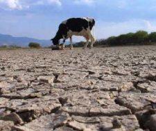 Severa sequía en Argentina impacta en el producto bruto interno 2009.
