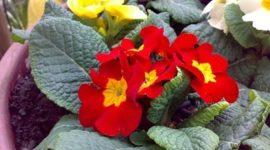 Las mejores plantas para el jardín