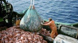 La Pesca ilegal en España en el ojo de la tormenta, la CE amenaza con llevar la situación a los tribunales.
