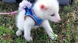 Rylai, la adorable zorrita que revoluciona internet
