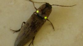 Cinco animales raros que brillan en la oscuridad