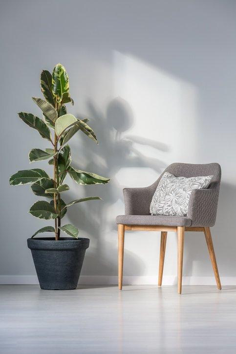 Como decorar un pasillo largo plantas