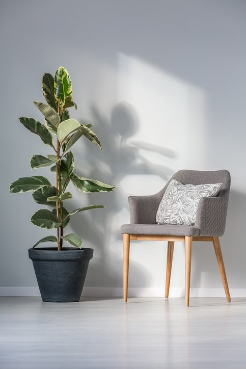 Como decorar un pasillo largo plantas