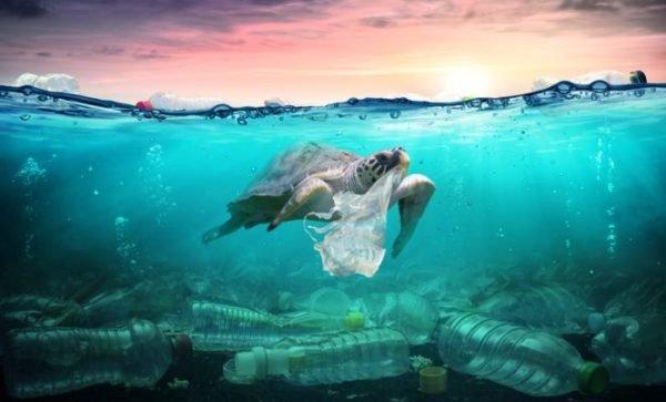 bolsas-de-papel-o-plastico-que-es-mas-ecologico-tortuga-atrapada-bolsas-istock