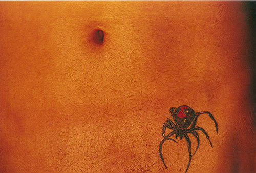 the spider and its den por omnia_mutantur.