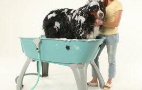Una bañera especial para tu mascota