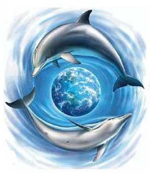 dolphin-10