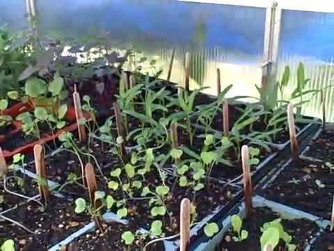 hecho de poder tener tomateras o lechugas plantadas en casa era algo que aos atrs apenas se vea o se daba en hogares que tuvieran su propio huerto o