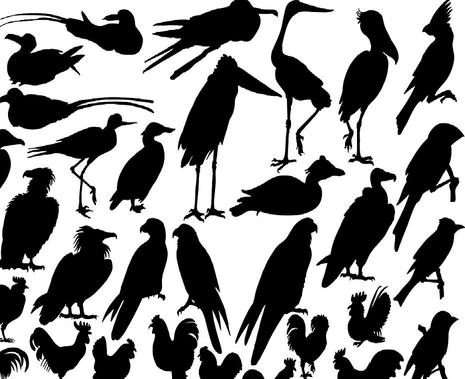 many-birds-tattoos