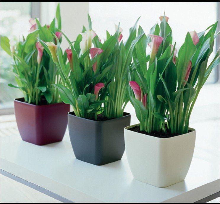 plantas-interior-hogar-1