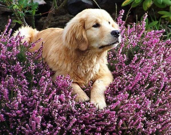 Plantas venenosas para perros que no debes plantar en el jardín